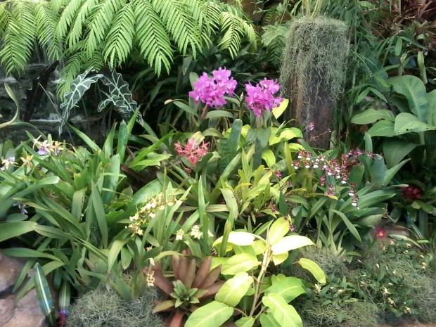 Orchid House 2